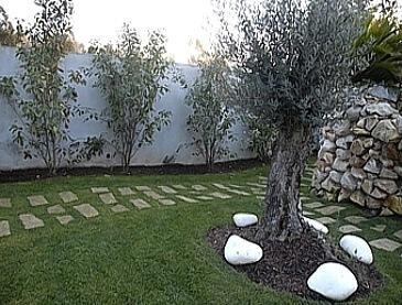 brispedra exemplos decorativos para jardim oliveira